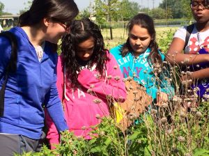 Students return to Roxana Marsh to see fruits of their labor