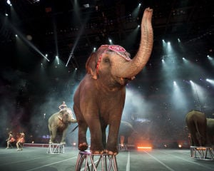 Tricks and Treats: Ringling Bros. and Barnum & Bailey Circus celebrating 143rd year