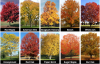 Fall color quiz: Match leaf to tree