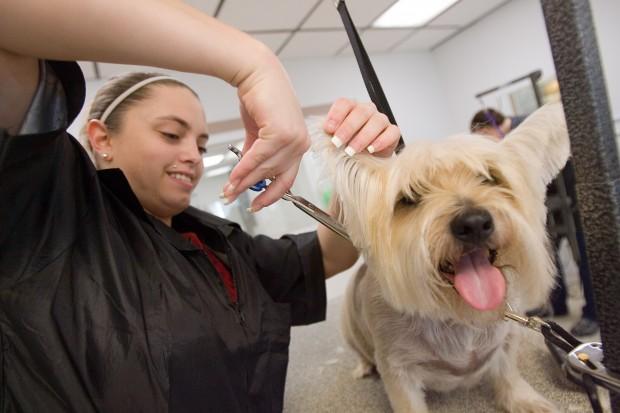 Dog Grooming School Indiana