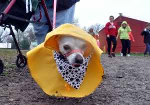 Runners strut their stuff for animal shelters, rescues