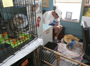Board to hear request for Sunset Hill animal shelter
