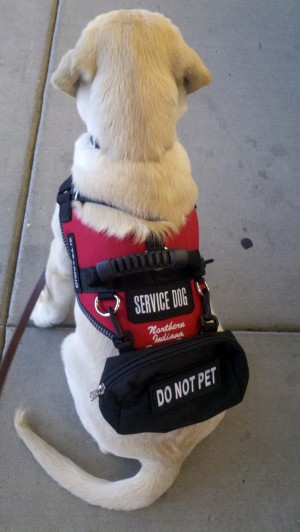 Service dogs lend a helping paw