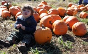 The pick of the pumpkin patch