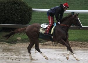 'Chrome' looks for golden Preakness as favorite