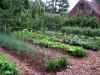 Gardening-Weedless