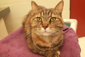 Pet of the Week: O'HARA