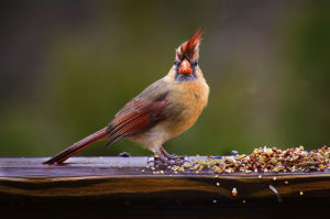 For the birds: How to attract feathered friends to outdoor spaces