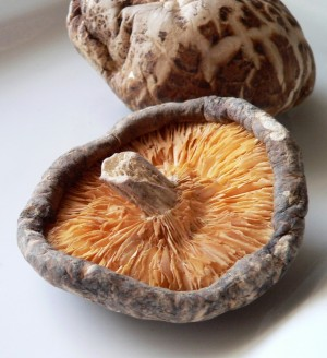 Herbal Healer: What is shiitake?