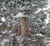 Winter Scene Bird Feeder with Hungry Feathered Friends