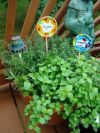Herb Garden Plant Markers