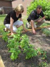 Purdue launches herb garden to promote healthy cooking