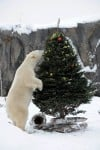 Holiday treats at Brookfield Zoo