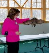 Crete library offers program on bats