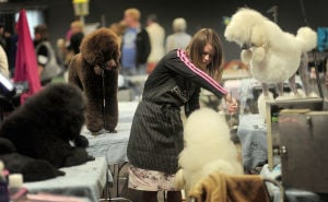 Dogs put best paw forward at AKC show