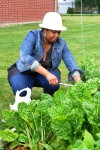 Gardens growing hope in Sauk Village