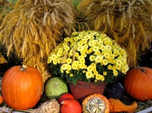 It's Sawyer Garden Center for welcoming the joys of autumn