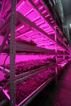Green Sense Farms indoor farm