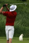 Munster High golfer attracts feline fan