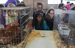 Students get close-up look at farm animals during 4-H event