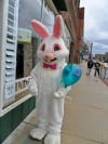 Bunny hops into Lowell