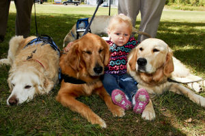 'Tail-Gate Party' introduces comfort dogs