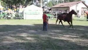 VIDEO: Preview - Lake County Fair 2011