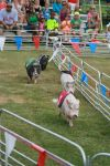 Swifty Swine Pig Races.jpg