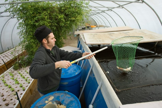 Fish are fueling this farm gary news for Raising tilapia in a pool