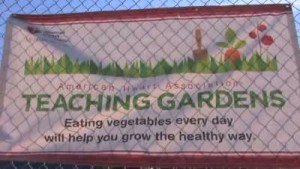 Hammond school plants garden