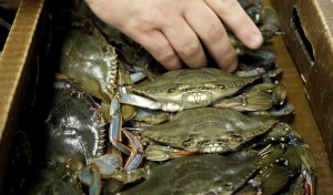 Dishing up trash: New look for sustainable seafood