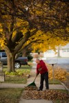 WILDPORT - Fall Leaf Raking