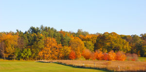 Falling into the Season: The best places to enjoy fall colors around Porter County