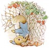 Beatrix Potter Illustration of Peter Rabbit Caught with Jacket Buttons Tangled in Garden Netting