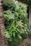Grow up! Maximize space with vertical gardening