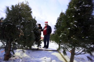 O Tannenbaum: Tree shopping lights up
