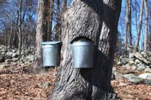 Dunes History Series-Focus on Maple Sugaring