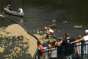 Ducks race to raise money for Hobart Community Foundation