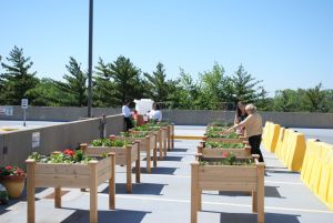 Ingalls Hospital rooftop garden to benefit 3 food pantries