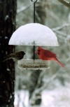 Covered Bird Feeder with Red Cardinal in Winter Scene