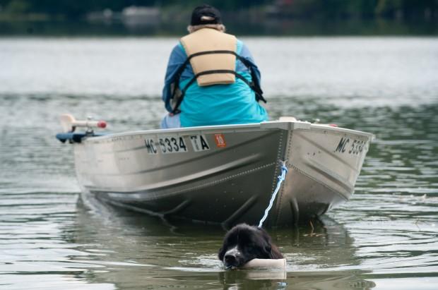 Valparaiso Dog Rescue