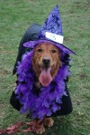 Animals get wild at doggy Halloween parties