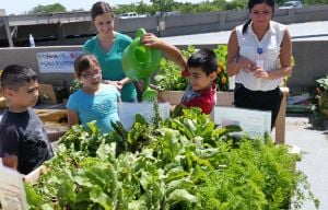 Rainy days, sunny days help hospital rooftop garden flourish