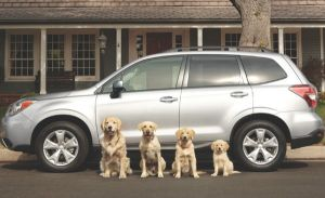 Nielsen Subaru gives pets a helping paw