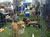 Homeless Animals Day matches people, pets