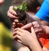South Haven students plant vegetables in teaching garden
