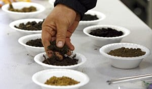 From the bottom up: Learning about a garden's soil can help its success