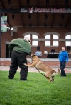 Belgian Malinois stars at Valpo Police 5/K9 run