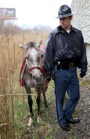 Horse saved from scary situation on I-65