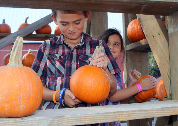 Concert Coulters Pumpkin Patch/ Adoption Event in